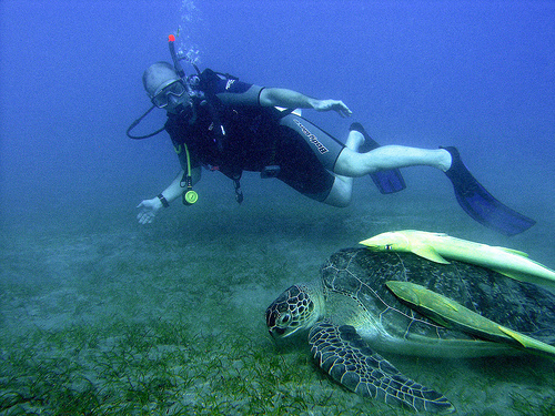 Description: Jordan is a great place for beginner divers to experience the Red Sea