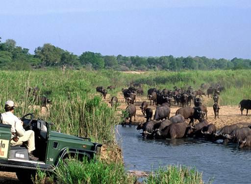 Description: Kruger National Park is the largest game reserve in South Africa