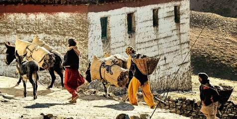 Description: We came across donkeys carrying goods and returning to home from the center of Kaza district.