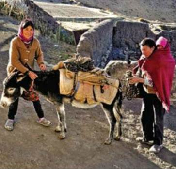 Description: His parents were harnessing a donkey to visit a market at Kaza.