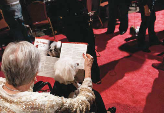 Description: On the red carpet, a woman in a wheelchair and her bichon are waiting for their turn. She is reading an article on pet progeny. The dog seems rather interested by the surrounding bustle, but remains in place