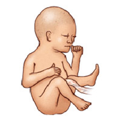 Description: At that time, the fetus weighs about 900-910g.