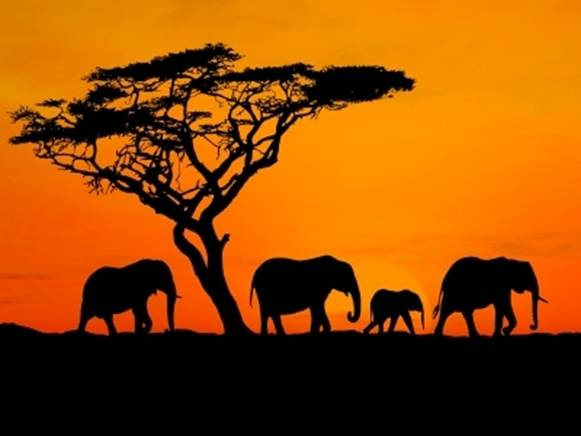 "Description: The safari – the Swahili word for ""long journey"" – was born in Kenya"