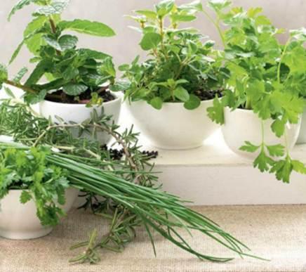 Description: Description: On tending herbs at home