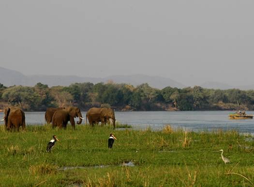 Description: Lower Zambezi National Park Zambia