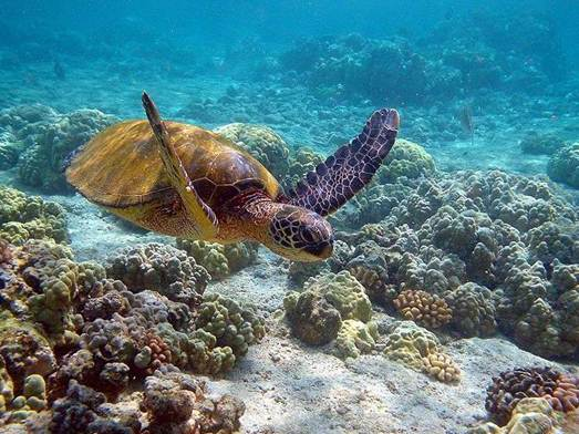 Description: the highlights here are Chumbe's spectacular coral gardens, as well as the dolphins, turtles and 400 species of fish that frequent its surrounding waters