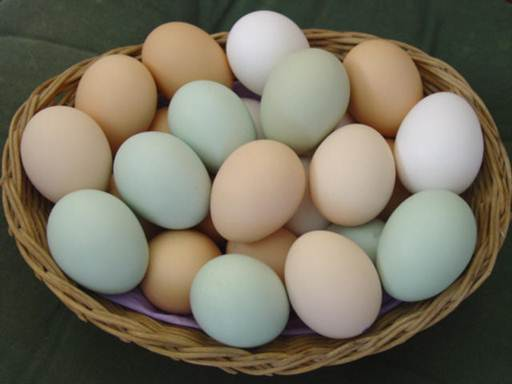 Description: Eggs