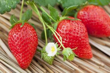 Description: Strawberry