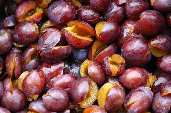 A part from knowing prunes as a delicious snack, many people might not know that they are also very good for children.