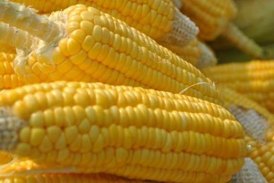The modern medicine believes that corn is rich in unsaturated fatty acid, vitamins, trace elements and other amino acid.