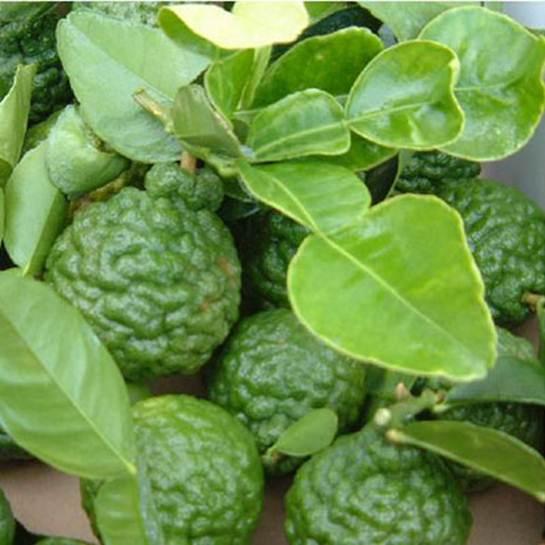 Description: 1. Kaffir lime