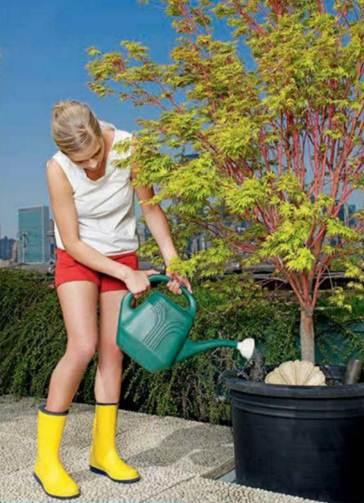 Grow your own edible garden for Easy to maintain garden