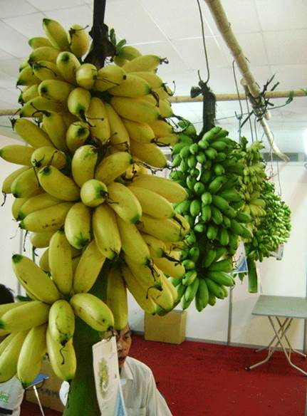 Eating bananas help reduce stress and improve the intelligence.