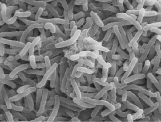 The most noticeable intestinal microorganisms that can cause diarrhea in summer is vibrio cholera (V. cholera).