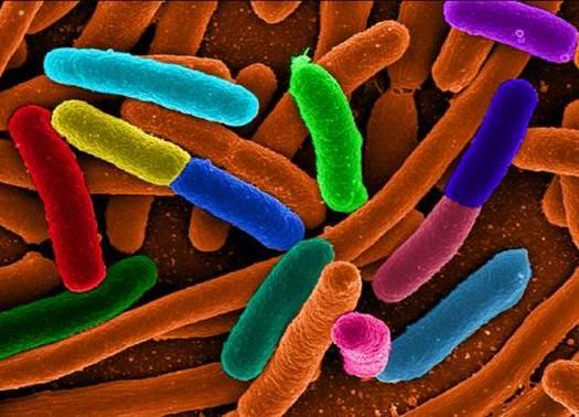 E.coli bacteria are ones of factors causing diarrhea.