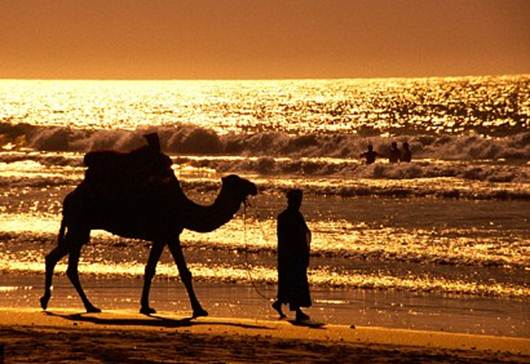 Description: Saddle up for a romantic ride on the beach