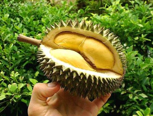 Description: Durian is good for health