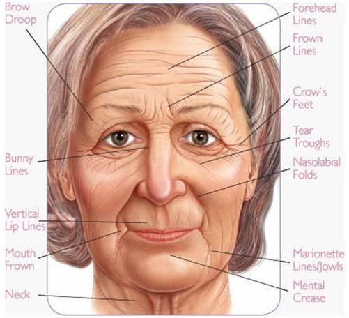 Best Natural Under Eye Wrinkle Treatment