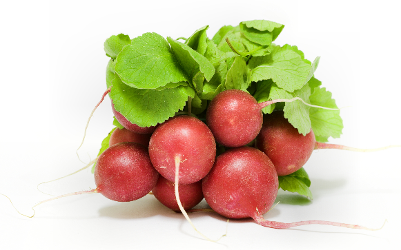 Red radish is very good at treatment the constipation and hemorrhoids
