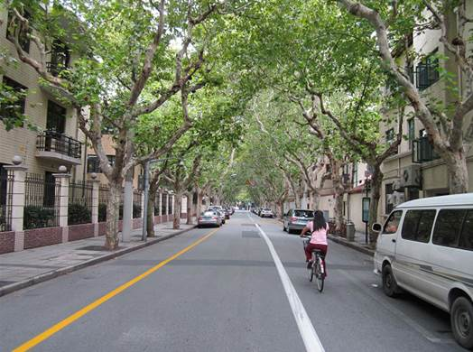 This is a typical street scene in the French Concession area of Shanghai, China