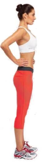 Stomach strengthener